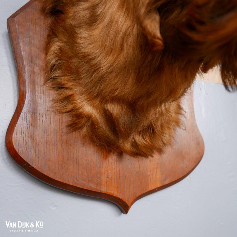 hertenkop op houten schild